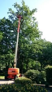Boomverzorging Bilthoven