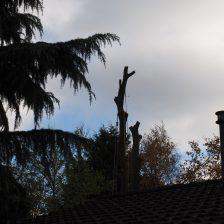 Bomen kappen Ermelo Harderwijk