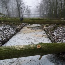 Bomen verwijderen in Zeewolde, Harderwijk e.o.