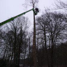 Boomverzorging en bomen rooien