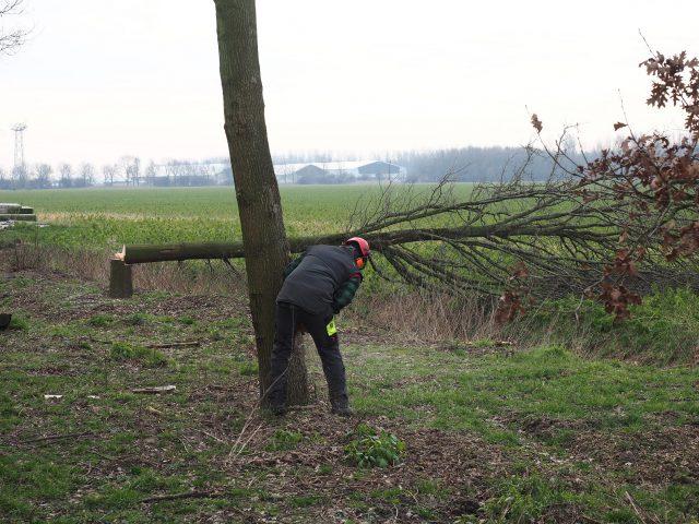 Bomen rooien en boomverzorging