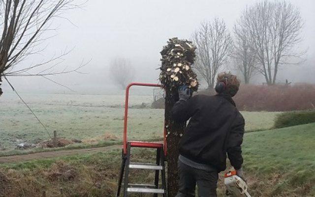 Snoeien en onderhoud bomen