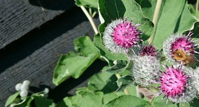 Wilde flora bij een vlonderterras