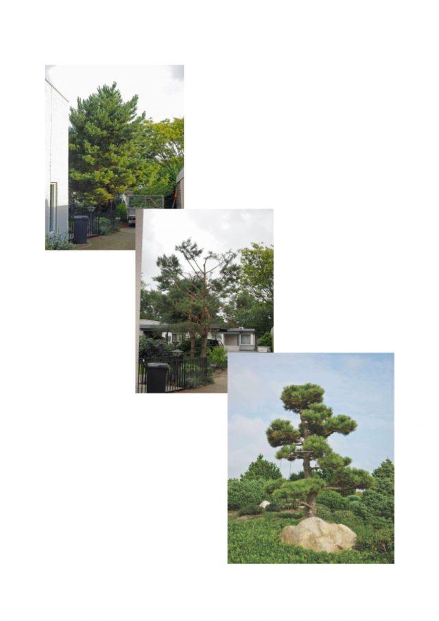 Bomen snoeien in Zeewolde en Harderwijk